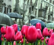 Photo Tulips in the city 2 by Marinela Prodan