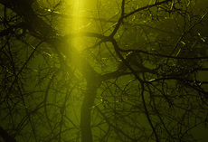 Photo Tree in green rain by Rune Spaans